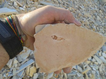 Um dos fósseis coletados.